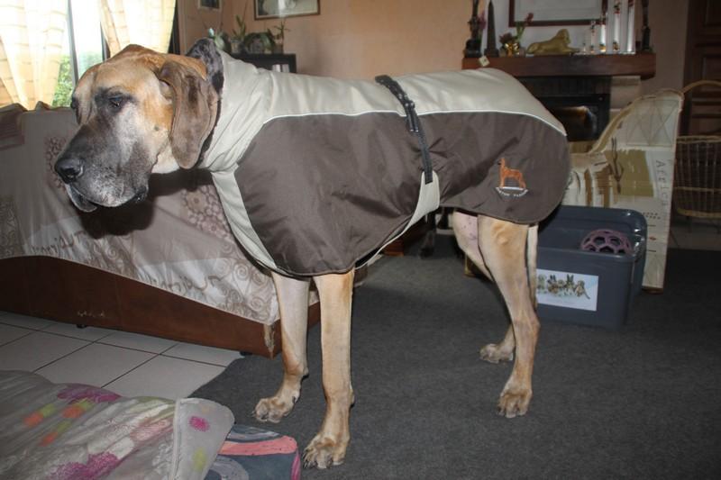 manteau dogue allemand