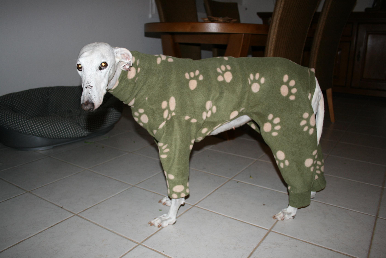 pyjama whippet