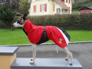 manteau whippet