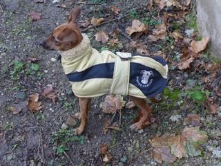 manteau petit levrier italien