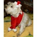 Ensemble écharpe et bonnet pour chien petit et moyen