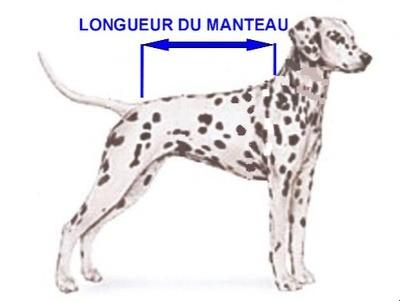 Manteaux Chien Moyen (dalmatien)