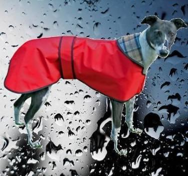 manteau pluie levrier