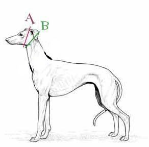 colliers artisanaux pour whippets galgos podencos greyhound